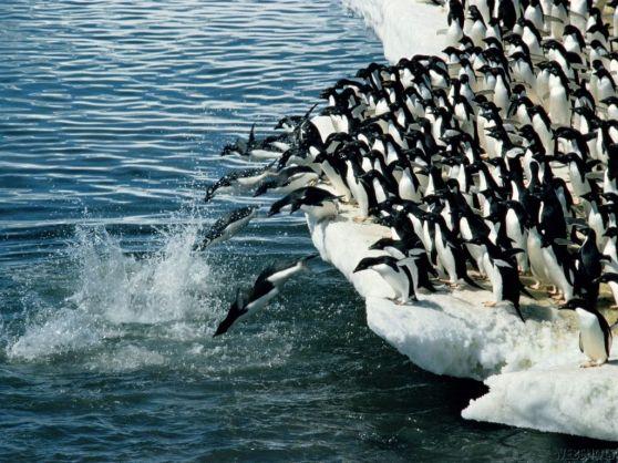 saas-penguin